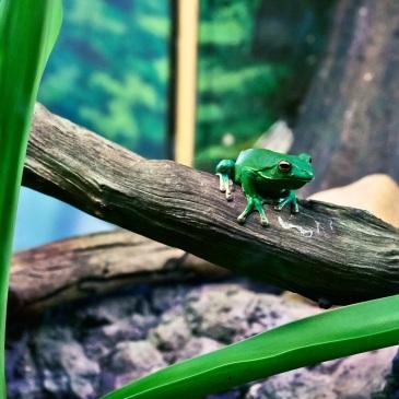 Make a Frog Jump